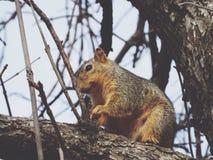 Eichhörnchen in einem Baum Lizenzfreies Stockbild
