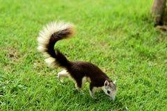 Eichhörnchen im Garten lizenzfreie stockbilder