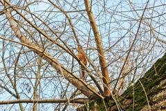 Eichhörnchen im Herbstpark lizenzfreies stockbild