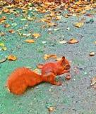 Eichhörnchen im schönen Garten Stockbild