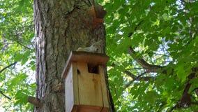 Eichhörnchen im Wald sitzt auf dem Vogelhaus stockbild