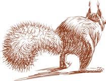 Eichhörnchen läuft weg Stockfoto