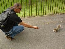 Eichhörnchen in London Lizenzfreies Stockfoto