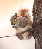 Eichhörnchen in Manhattan Stockfotos