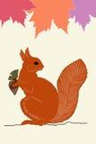 Eichhörnchen mit Eichel Stockbilder
