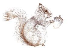 Eichhörnchen mit Eichel, Vektor Lizenzfreies Stockbild