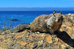 Eichhörnchen mit einer Ansicht Lizenzfreies Stockbild