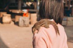 Eichhörnchen mit Menschen Stockfotografie