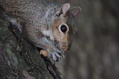 Eichhörnchen mit Mutter Lizenzfreies Stockfoto