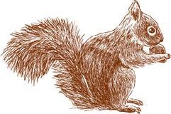 Eichhörnchen mit Nuss Lizenzfreies Stockfoto