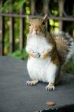 Eichhörnchen mit Penny Lizenzfreie Stockfotografie