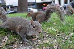 Eichhörnchen - Mobile, Alabama stockfoto