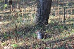 Eichhörnchen nahe dem Baum im Wald lizenzfreies stockfoto