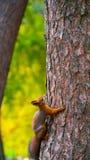 Eichhörnchen sitzt auf einem Baum Stockbild