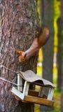 Eichhörnchen sitzt auf einem Baum Lizenzfreies Stockbild