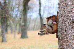 Eichhörnchen sitzt auf einer Krippe mit Samen Lizenzfreies Stockbild