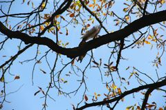 Eichhörnchen sitzt hoch auf einem Baum im Schatten lizenzfreie stockbilder