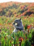 Eichhörnchen Snack_Vertical Stockbilder