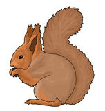 Eichhörnchen, Tier Lizenzfreie Stockfotos