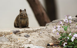 Eichhörnchen und Blume Stockfotos