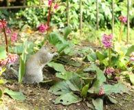 Eichhörnchen unter Blumen lizenzfreies stockbild