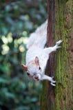 Eichhörnchenaufpassen Stockbild