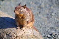 Eichhörnchenkalifornien-Küstenküstenautoreise Lizenzfreie Stockbilder