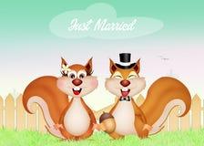 Eichhörnchenpaare Stockbild