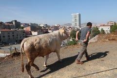 Eid-Al-Adha στην Τουρκία. Στοκ Εικόνα
