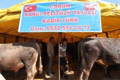 Eid al-Adha en Turquía. Imagen de archivo libre de regalías