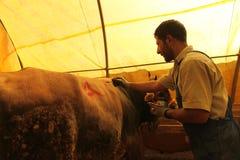 Eid al-Adha i Turkiet. Fotografering för Bildbyråer