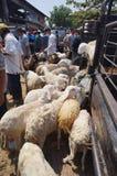 Eid Al Adha Royalty Free Stock Photo