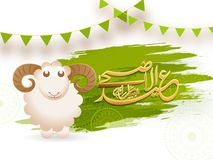 Eid-Ul-Adha, Islamic festival of sacrifice concept with happy sh. Eep and arabic calligraphic golden text Eid-Ul-Adha on green and white background Stock Image