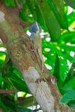 Eidechse auf dem Baum Stockbilder