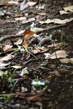 Eidechse auf dem Feld Stockfotografie