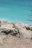 Eidechse auf der Küste Stockfoto