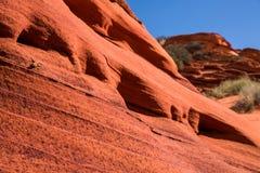 Eidechse auf steilem, gekennzeichnetem Felsengesicht des roten Sandsteins Lizenzfreies Stockbild