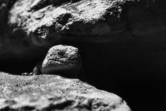 Eidechse in der Dunkelheit lizenzfreie stockbilder