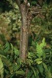 Eidechse, die Baumstamm in einem belaubten Wald anhaftet lizenzfreies stockbild