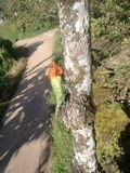 Eidechse (tropisch) Stockfotografie