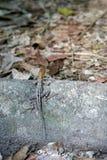 Eidechse unter Verwendung der Tarnung Stockfotografie