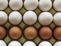 Eier Stockfotografie