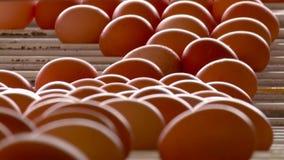 Eier stock footage