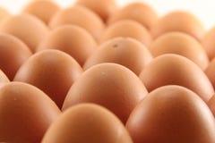 Eier auf Behälter Stockbild