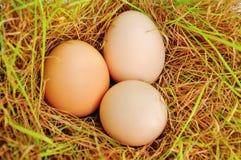 Eier auf einem Gras Stockfotos