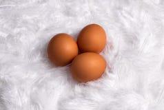 Eier auf Federn lizenzfreie stockfotografie