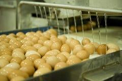 Eier auf Fertigungsstraße Stockfoto