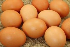 Eier auf klassischem Segeltuch Stockbilder
