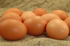Eier auf klassischem Segeltuch Lizenzfreies Stockbild