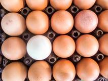 Eier auf Satz stockbild